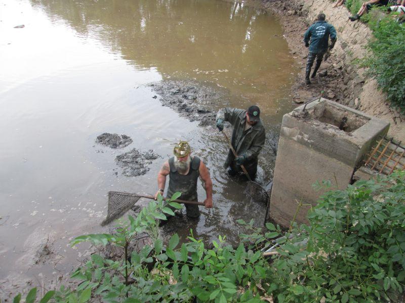 Výlov dolního rybníka 7