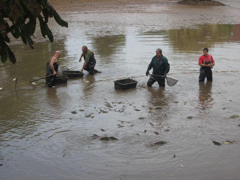 Výlov dolního rybníka 4
