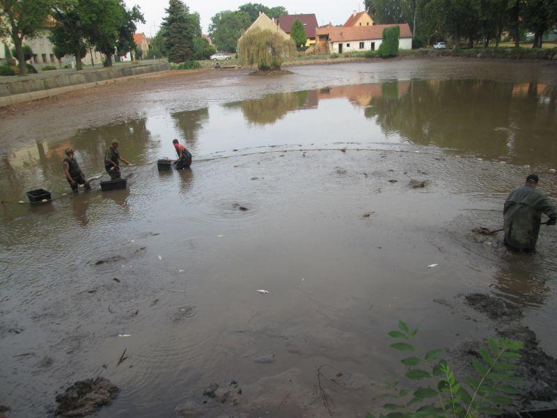 Výlov dolního rybníka 5