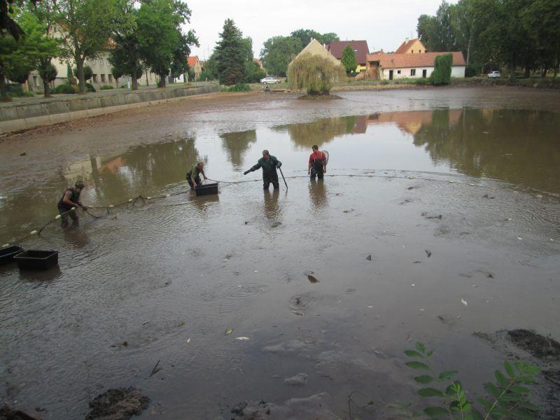 Výlov dolního rybníka 2