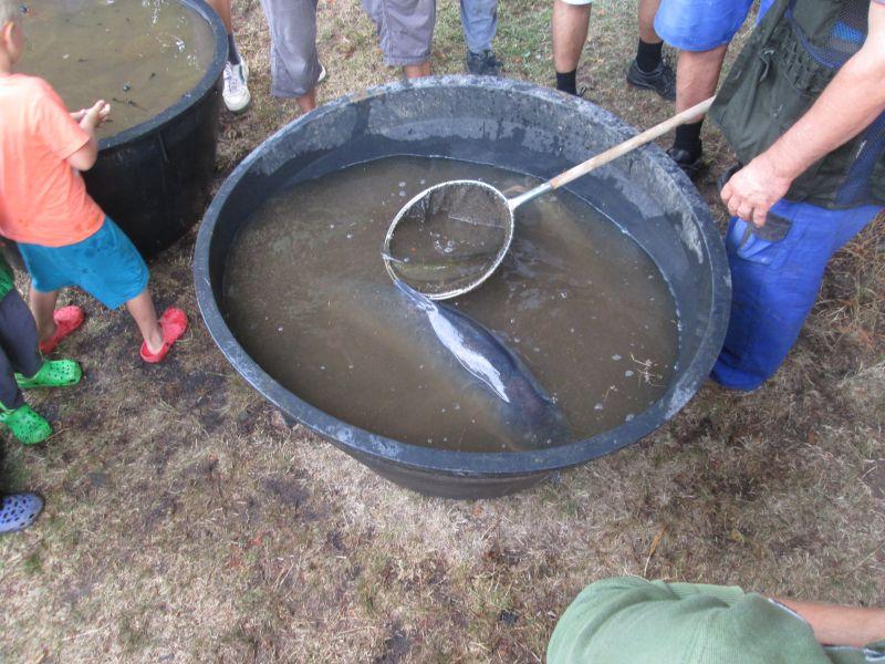 Výlov dolního rybníka 11