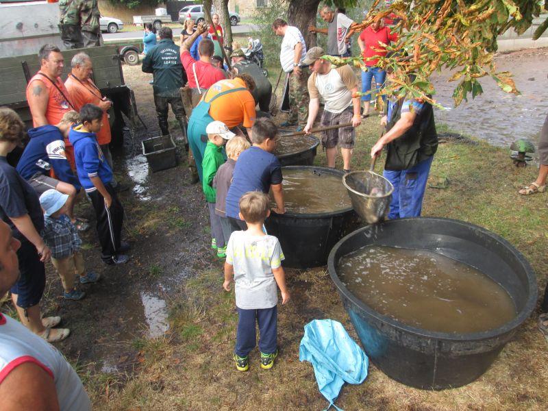 Výlov dolního rybníka 8